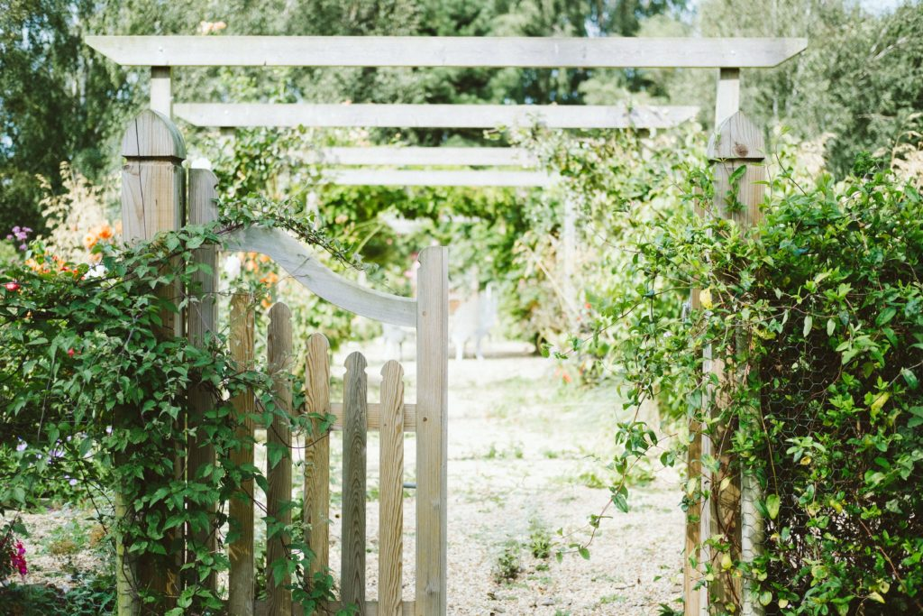 An open white gate in a garden wall covered over in greenery, inviting you to come and learn lessons from the land of Narnia.