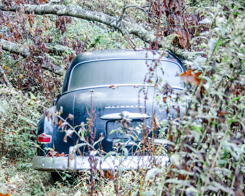 Classic car in the bushes.