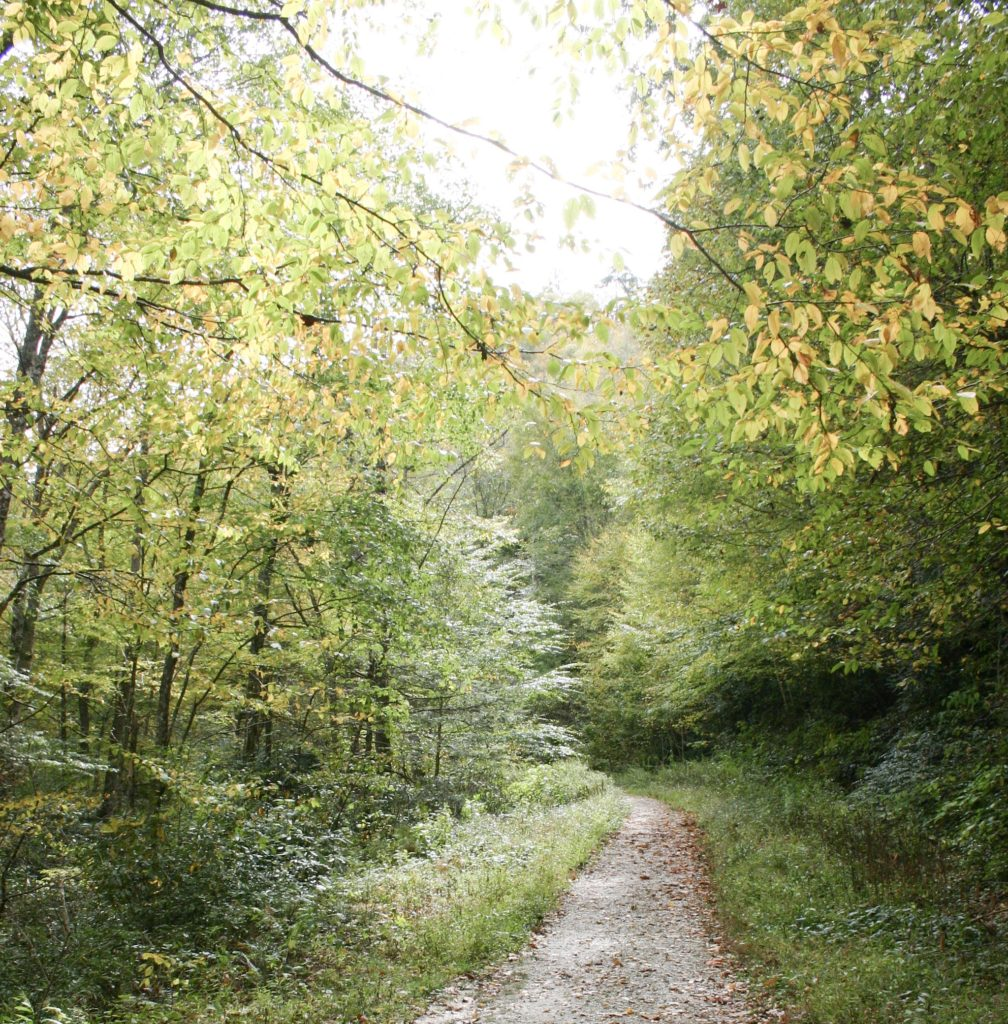 A dirt path through the forest with the trees ablaze with their fall colors.