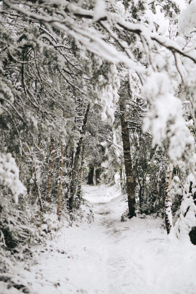 A snowy path through the woods with snow covered trees and overhanging branches meeting overhead.