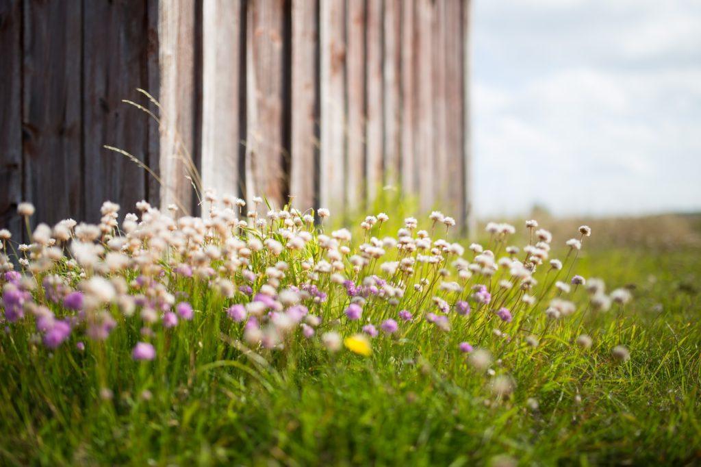 A beautiful spread of springtime wildflowers.