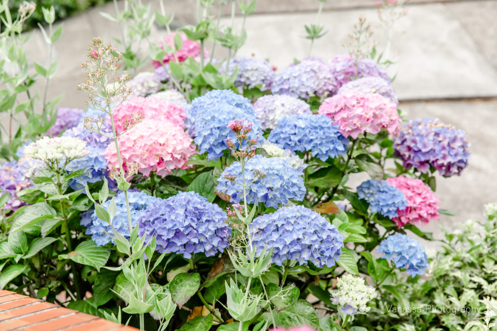 Beautiful blue, pink, and purple flowers growing in a garden reminding you to slow down and gain space.