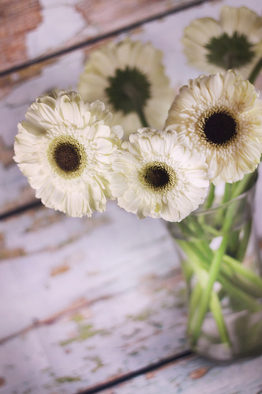 A clear vase of white daisies against a distressed wood background reminding you that you don't need to be distressed, but you can learn to control your emotions.