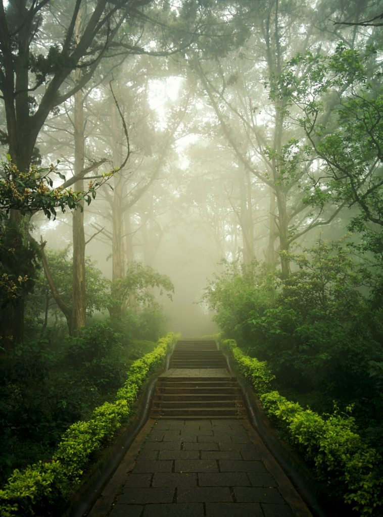 A path through the woods covered in haze, reminding you that even though it may be hard, you can keep moving forward.