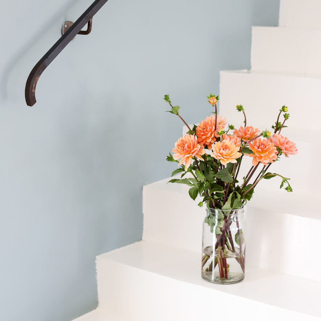 A vase of rose colored flowers in a clear vase sitting on a white staircase next to a blue wall, reminding you to calm down and control your emotions.