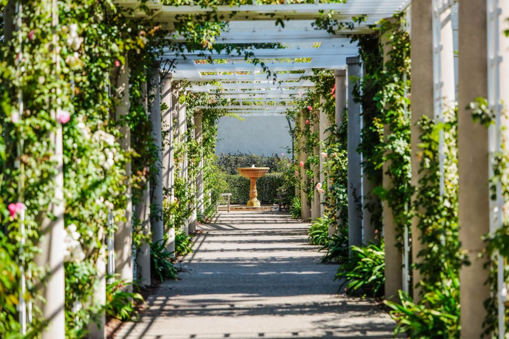 A beautiful walkway, overarched by white columns with green vines growing up them perhaps like something you would see in Narnia.