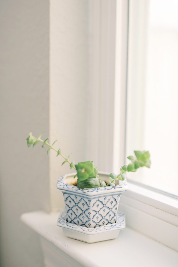 A green plant in a blue and white potter sitting in a window with light streaming in.