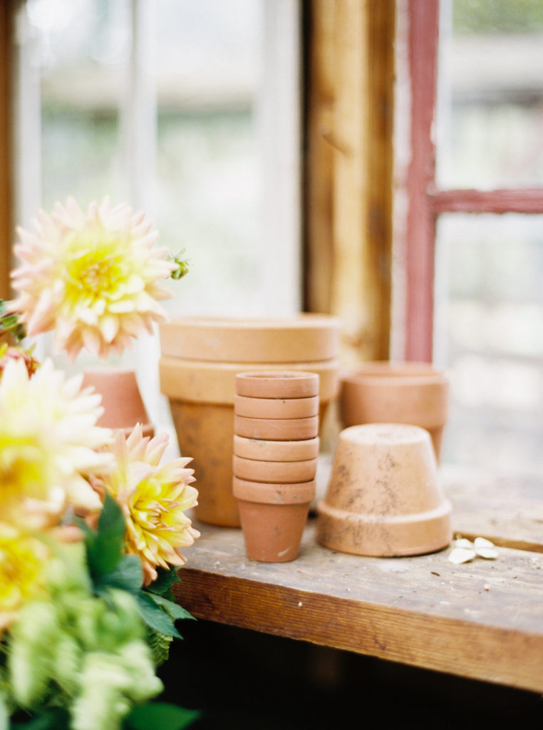 Clay flower pots sitting in a greenhouse window next to sunny yellow flowers.