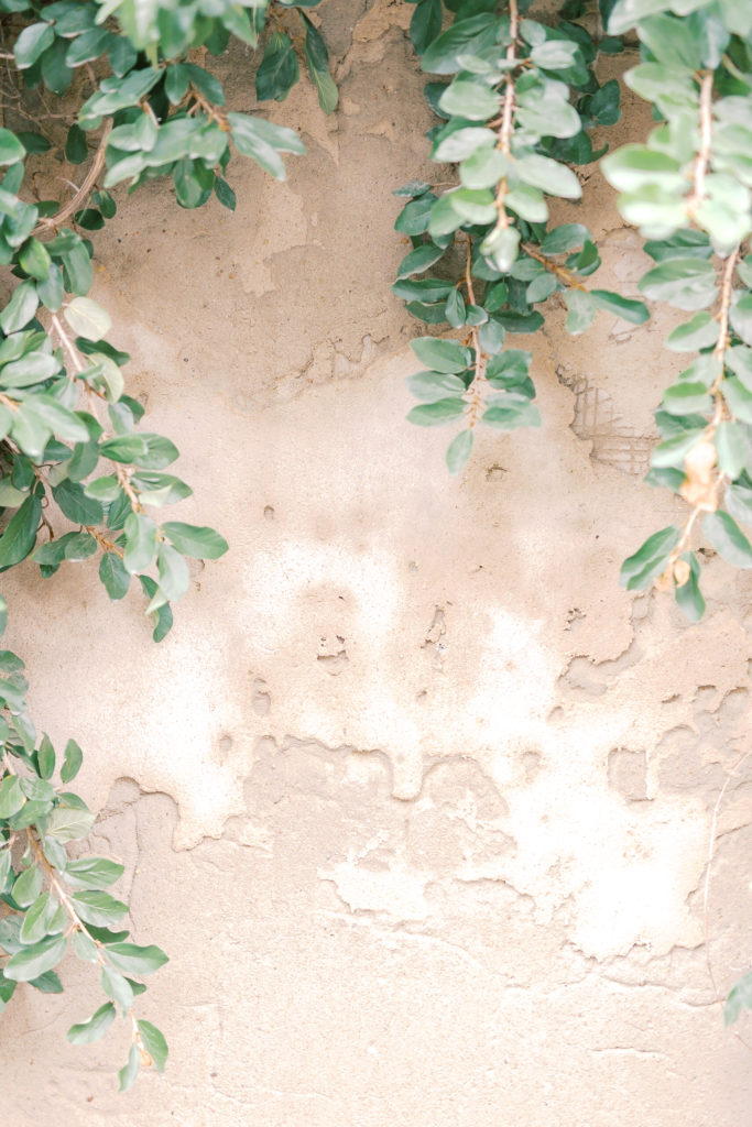 Ivy hanging over a terracotta wall, depicting the walls around the secret garden.