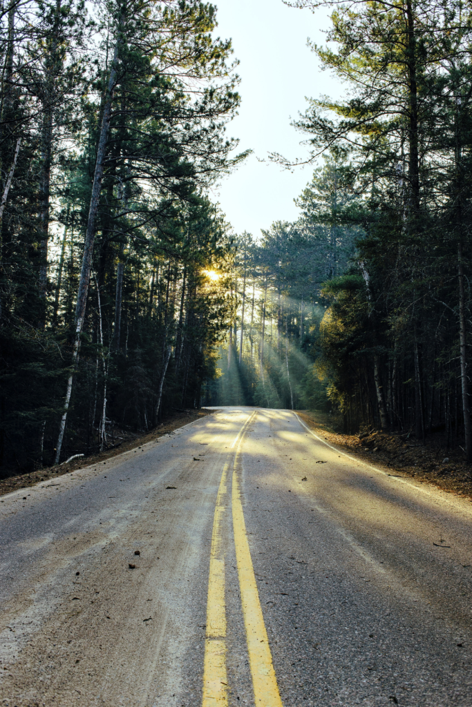 A road leading through pine trees with the sun streaming through the branches.