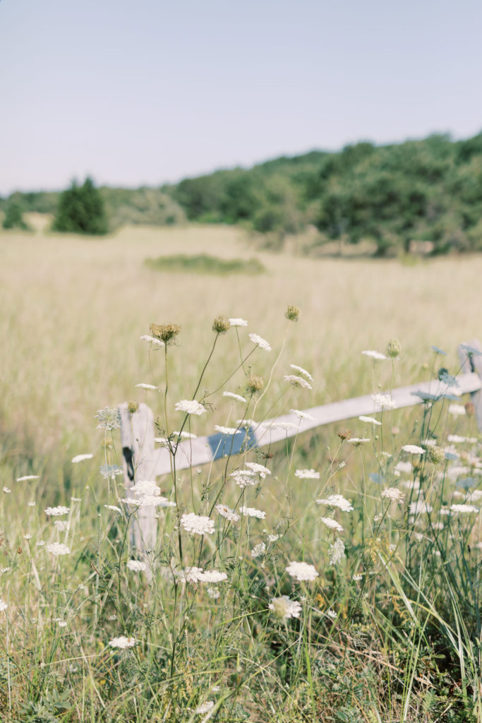 A field of tall grass with white wildflowers growing close to where you are standing.