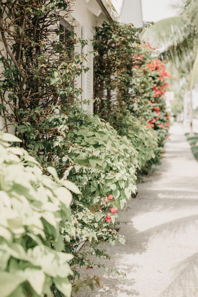 A path lined with greenery and beautiful flowers.  Figuring out what to do when you feel down is a process.