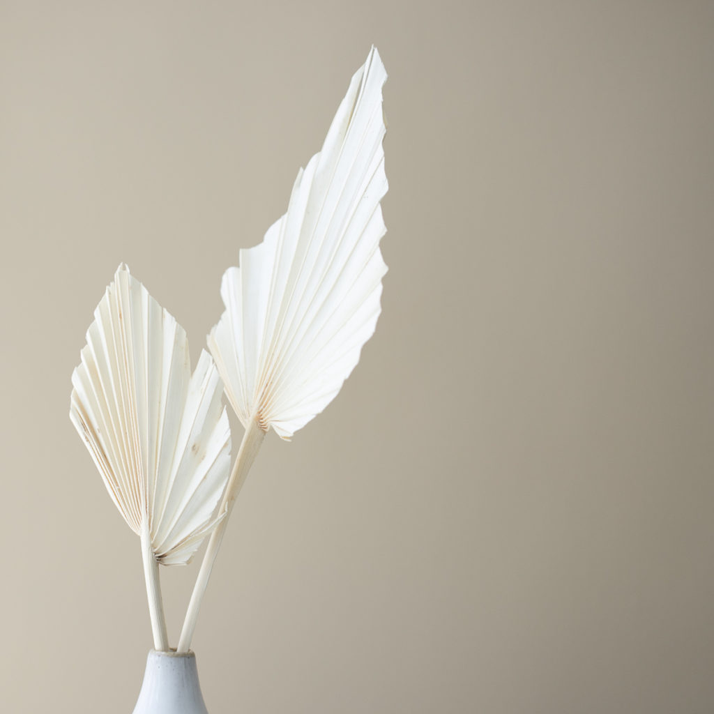 White paper fan flowers in a cream colored vase.
