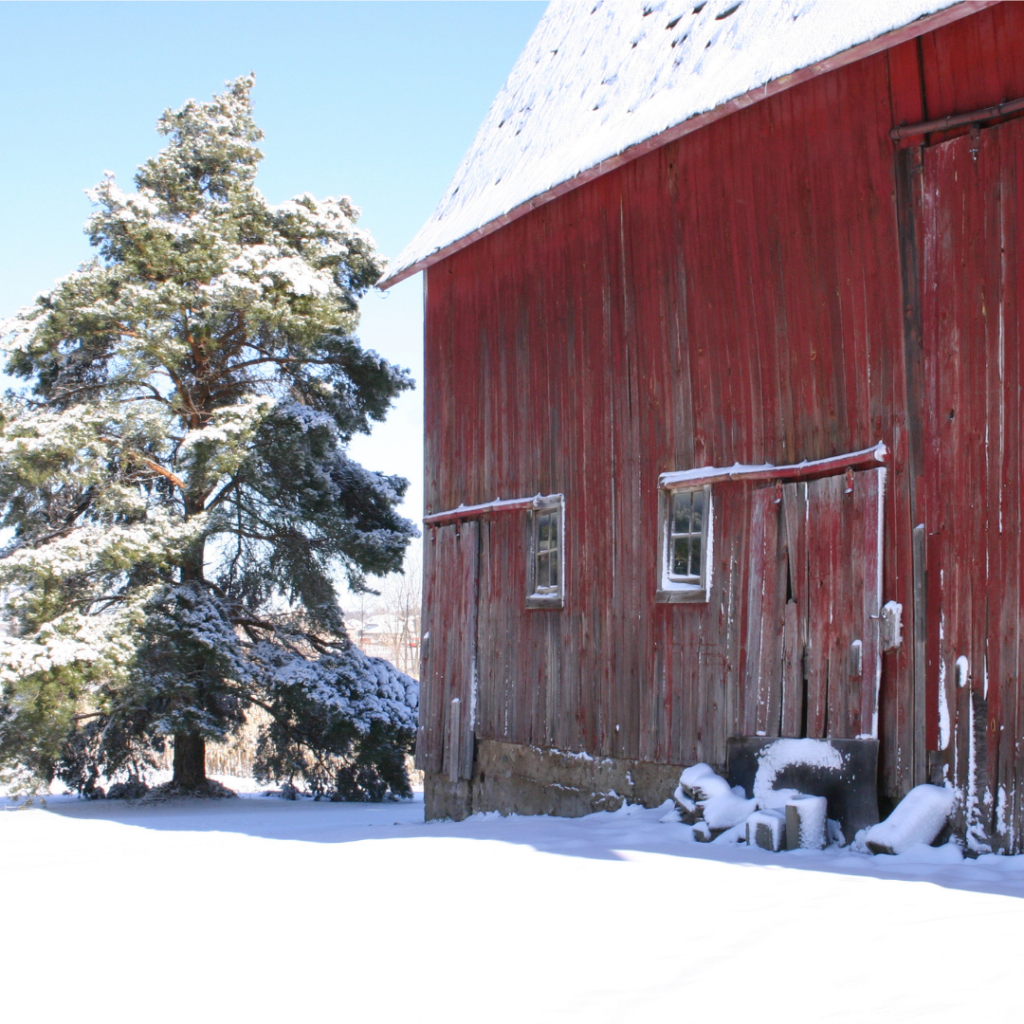 My grandfather's big, red barn on a cold and snowy day.