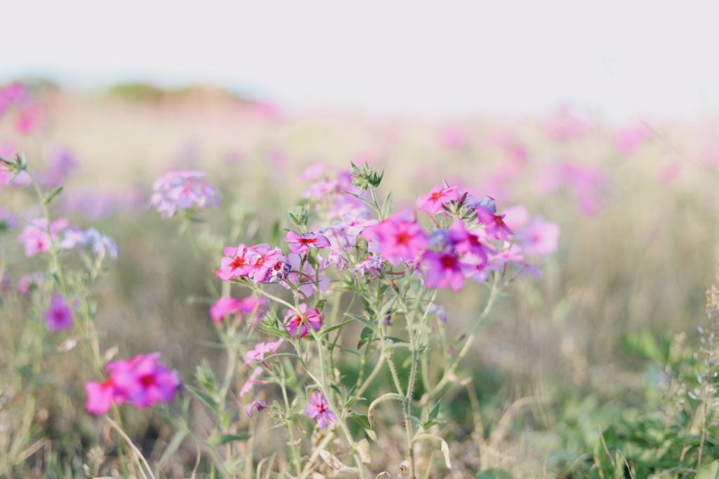A close up photo of some pink flowers in a field.  The simplest things can spark imagination.