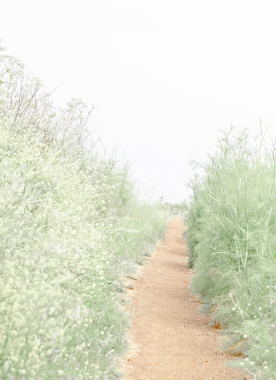 A dirt path leading through high grasses that are in full flower.