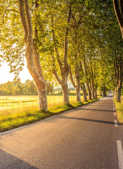 A road leading along a tree lined path with the sun shining through the leaves.