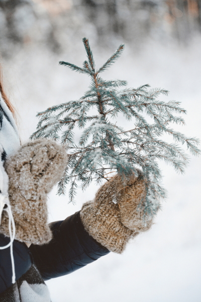 A lady with mittens on holding a tiny evergreen branch that looks like a Christmas tree.