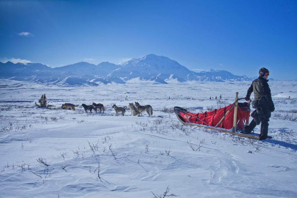 A person riding a dog sled, a common means of transportation in the frozen northern lands.