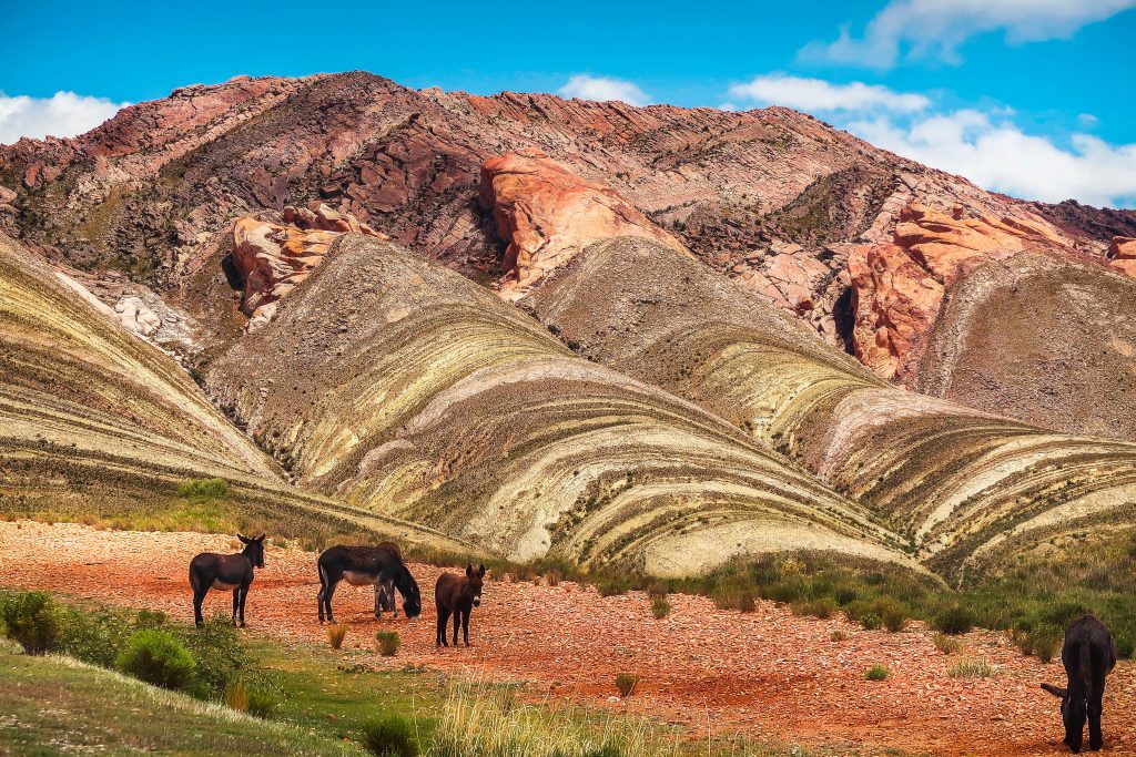 The beautifully striped and earth colored mountains of Argentina - with a few donkeys in the foreground.