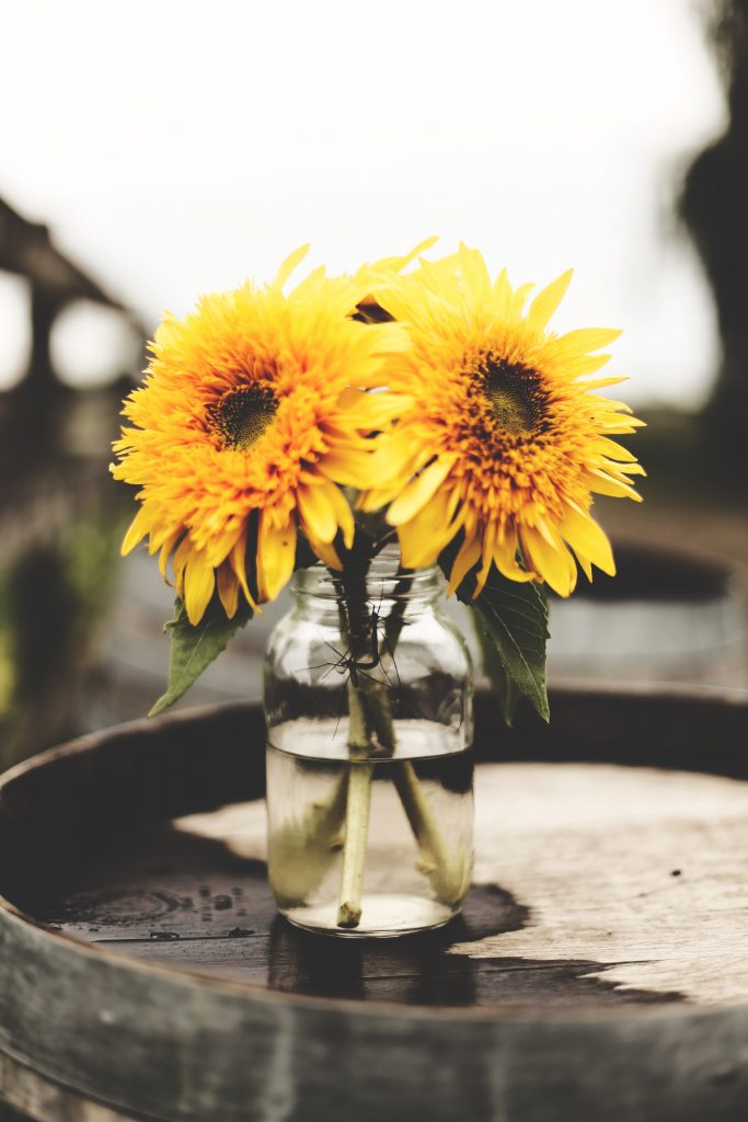 A small clump of dandelions sitting in a mason jar like a child might pick for their mom.
