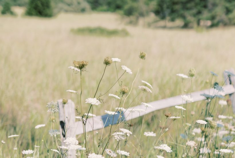 A wooden fence in a field of wildflowers