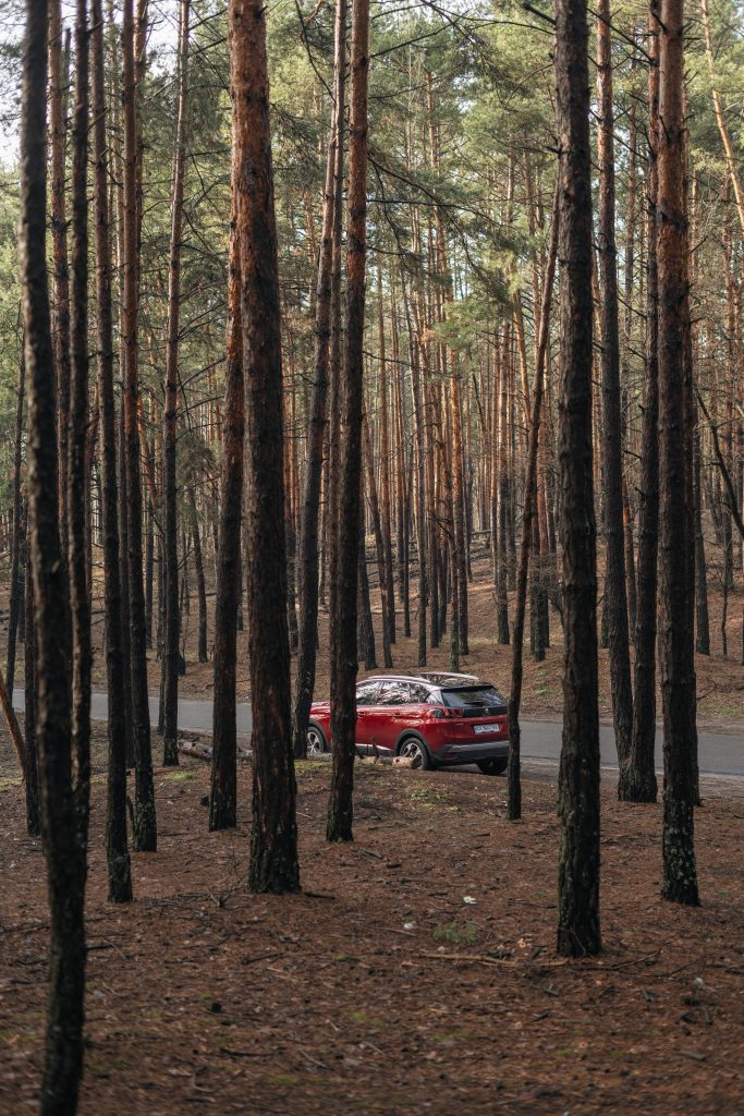 A red hatchback driving through the forest on a road trip.